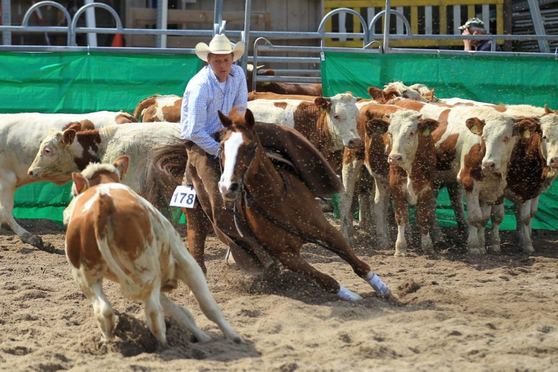Cutting Training mit Sven, hier auf IM A TINK N OAK E bei der NSHA Futurity in Paso Robles, Kalifornien, 2013